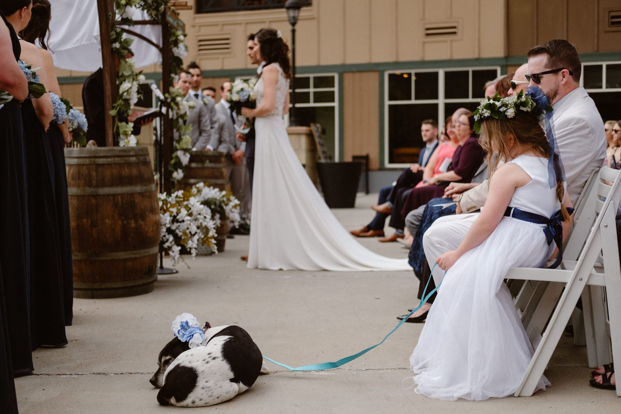 Dog watching parents get married at Main Street Station wedding in Breckenridge, Colorado
