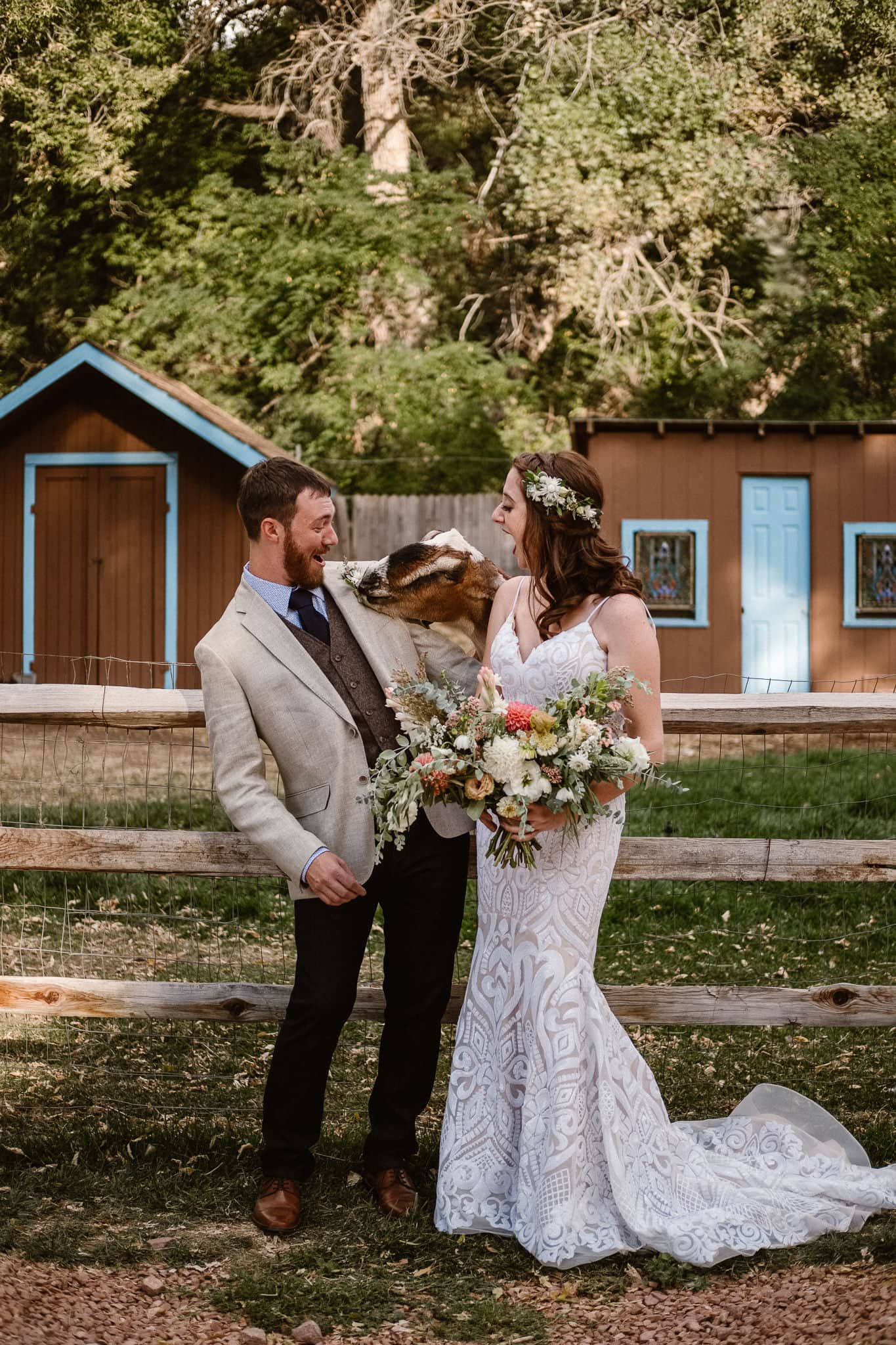 Lyons Farmette wedding photographer, Colorado intimate wedding photographer, bride and groom with goat, goat eating boutonniere