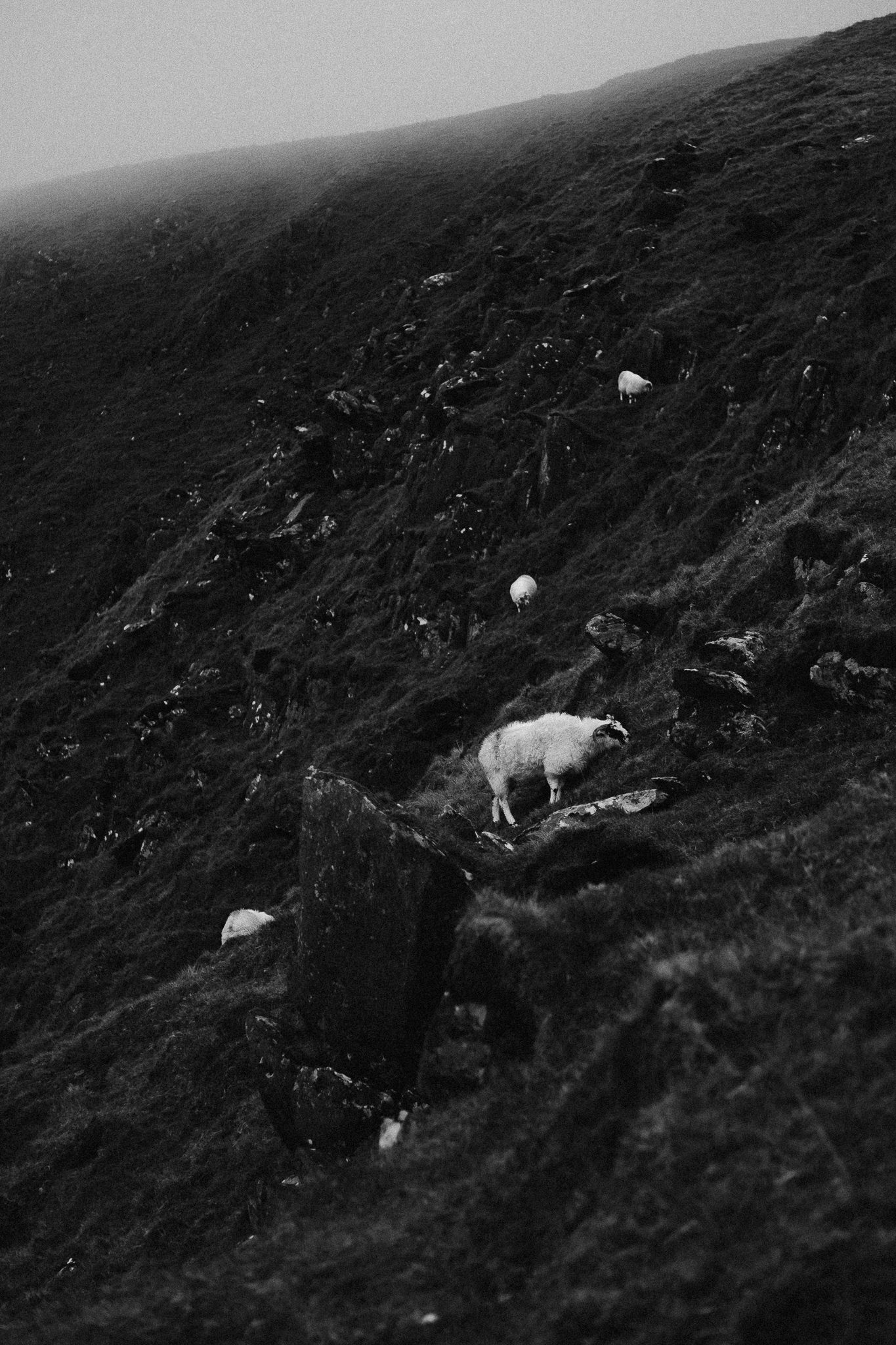 Black and white photo of sheep climbing a mountain in Ireland