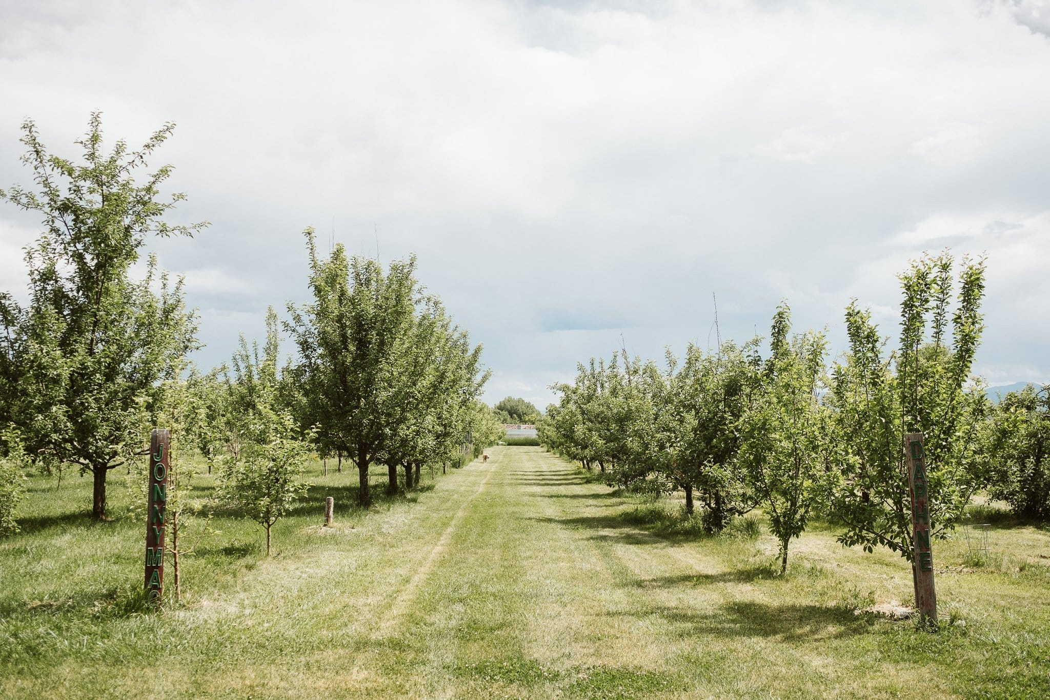 YA YA Farm & Orchard wedding venue outside Longmont and Lyons Colorado