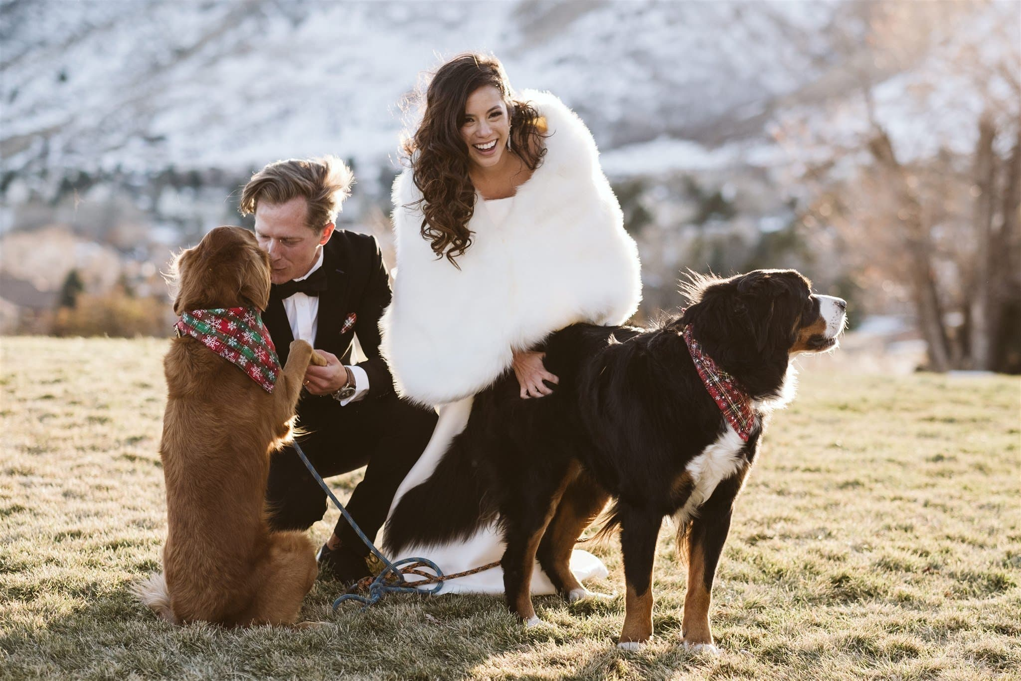Bride and groom playing with their dogs