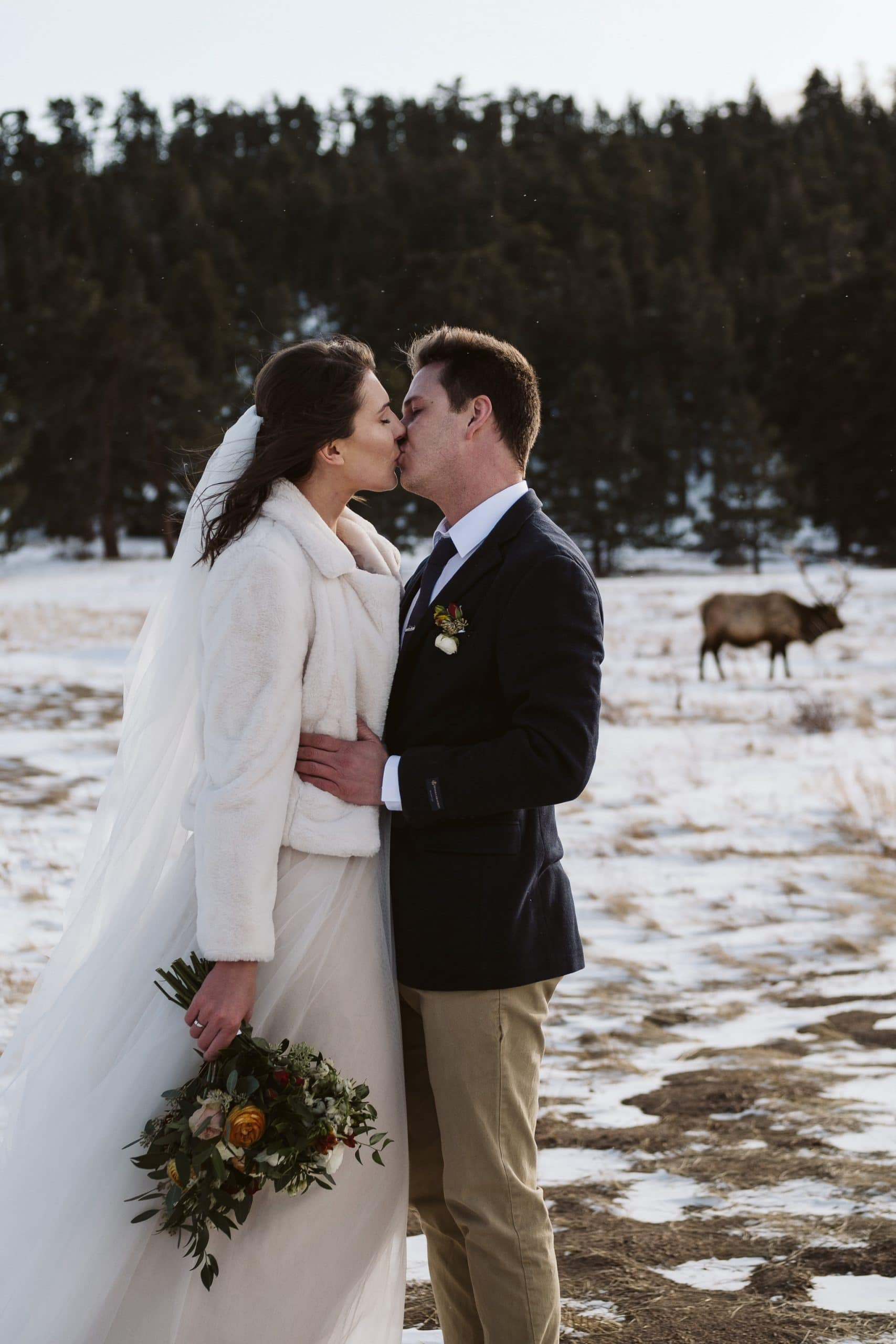 Rocky Mountain National Park elopement with elk in the background