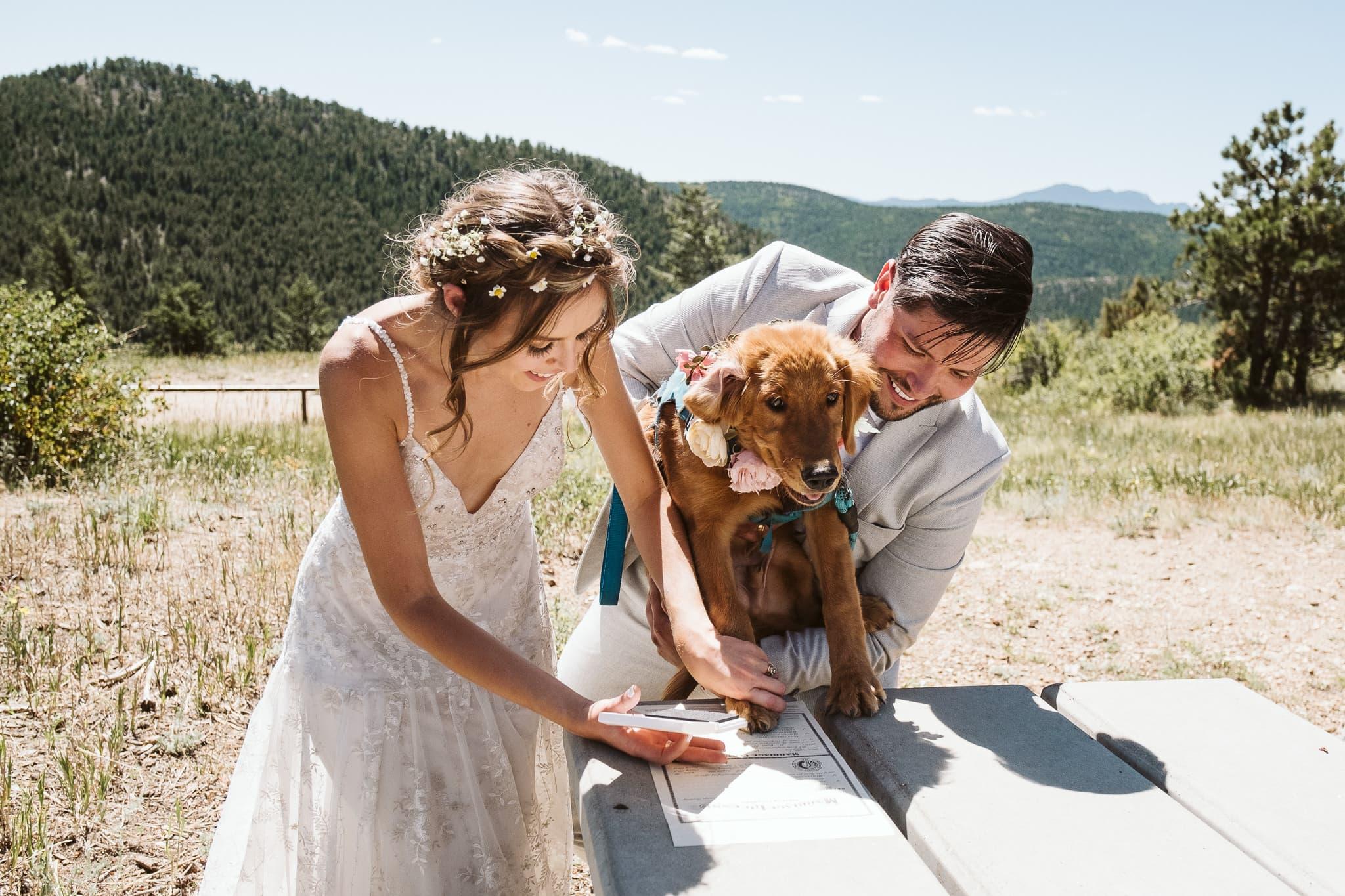 Dog signs marriage license in Colorado